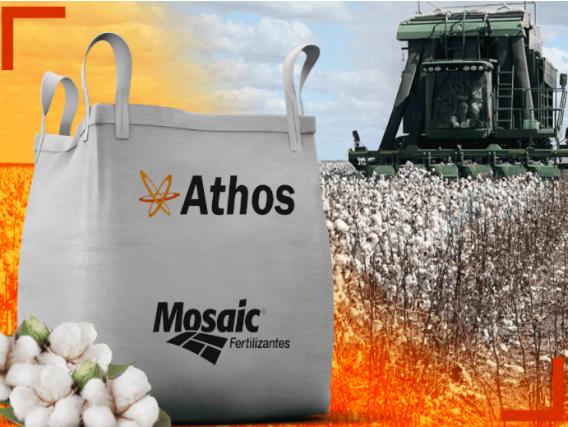 Fertilizante Athos 03 para Algodão Mosaic
