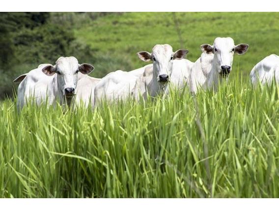 Crédito Rural para fazendas, sítios, chácaras e terrenos