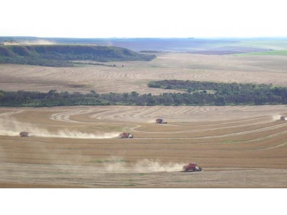 Fazenda Araucária - Go