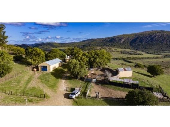 Fazenda Em Lavalleja Uruguai De 1280 Hectáres