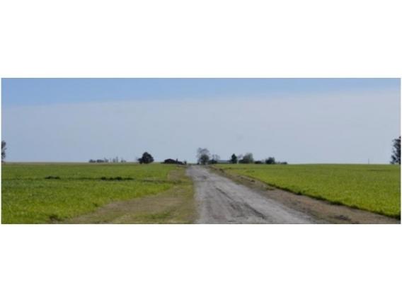 Fazenda Em Paysandú Uruguai De 788 Hectáres