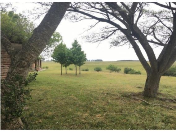 Fazenda Em Rio Negro Uruguai De 908 Hectares