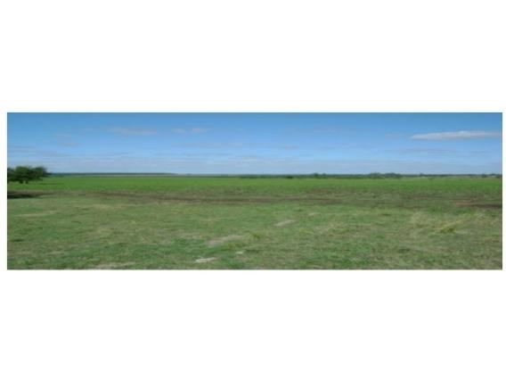 Fazenda Em São José Uruguai De 245 Hectáres