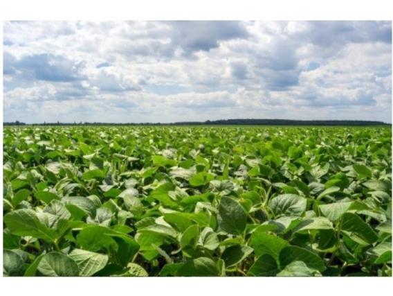 Fazenda Em Soriano Uruguai De 769 Hectáres