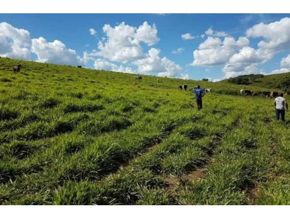 Fazenda Ibertioga - Mg