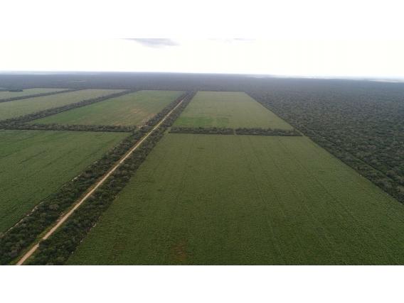 Fazenda Morotí - Paraguai