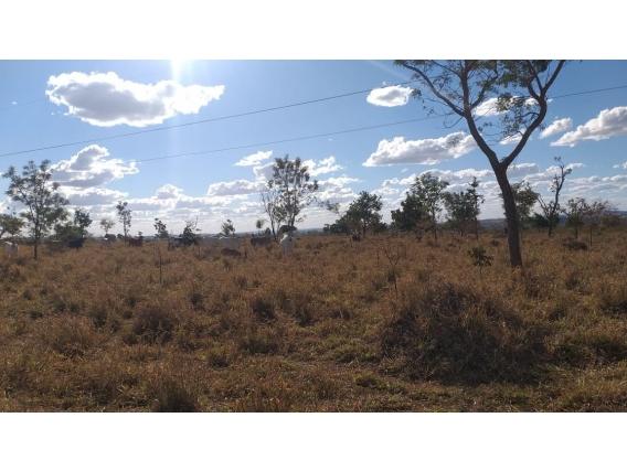 Fazendas e Terrenos. Crédito Rural E Imobiliário