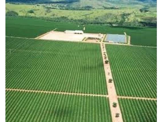Fazendas. Sítios, Chácaras,credito Imobiliário E Rural
