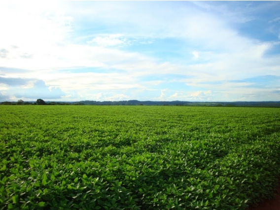 Fazendas. Sítios, Chácaras.credito Imobiliário E Rural