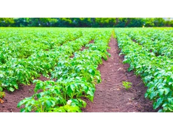 Crédito para compra de Fazendas, sítios, chácaras e terrenos