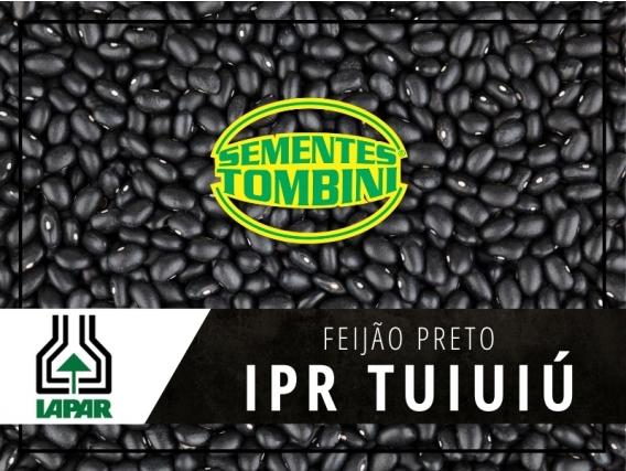Sementes de feijão IPR Tuiuiú