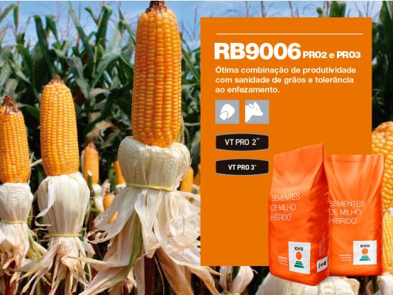 Milho KWS RB9006 PRO2 E PRO3