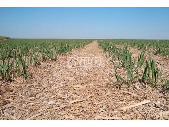 Fazenda Em Jutí - MS