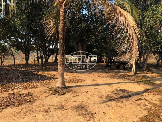 Fazenda Para Pecuária No Pará