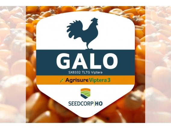 Sementes GALO VIP3