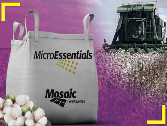 Fertilizante Microessentials S9 para Algodão Mosaic
