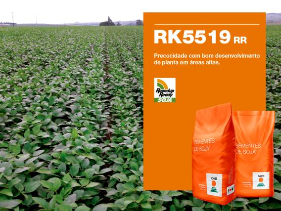Soja KWS RK5519 RR