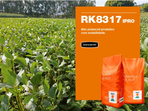 Soja KWS RK8317 IPRO