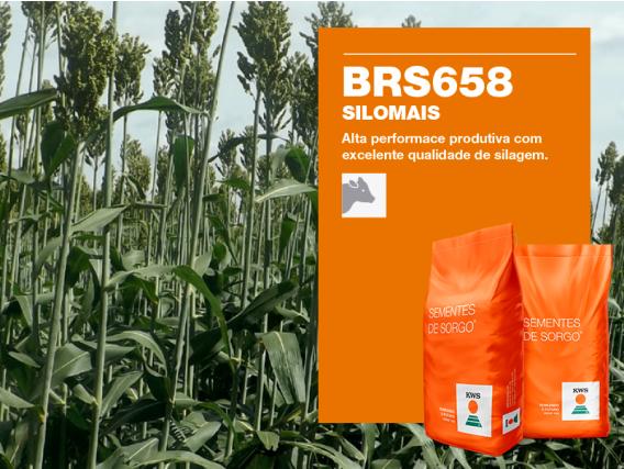 Sorgo KWS BRS658