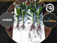 Inoculante BiomaPhos® - Primeiro Solubilizador de Fósforo do Brasil