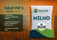 Sementes de milho GALO VIP3