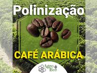 Polinização Assistida Inteligente Agrobee Café Arábica