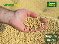 Seguro Agrícola Para Soja Garantia Agronegócios