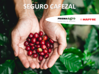 Seguro Cafezal MAPFRE